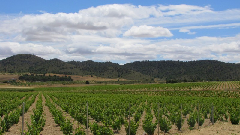 <span style='color:#780948'>ARCHIVED</span> - Open daily: La Ruta del Vino or Wine Route of Jumilla: visiting the wineries