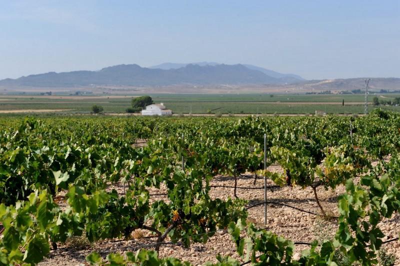 Yecla Wine Route: Bodegas Evine